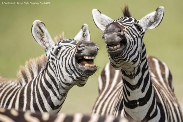 10 самых смешных снимков животных