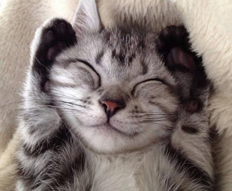 кошки умеют улыбаться